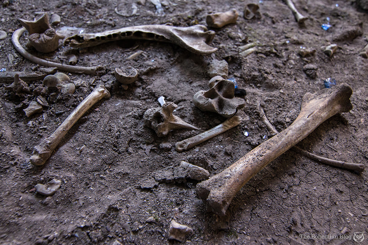 Bones lay scattered across the earth floor of the basement.