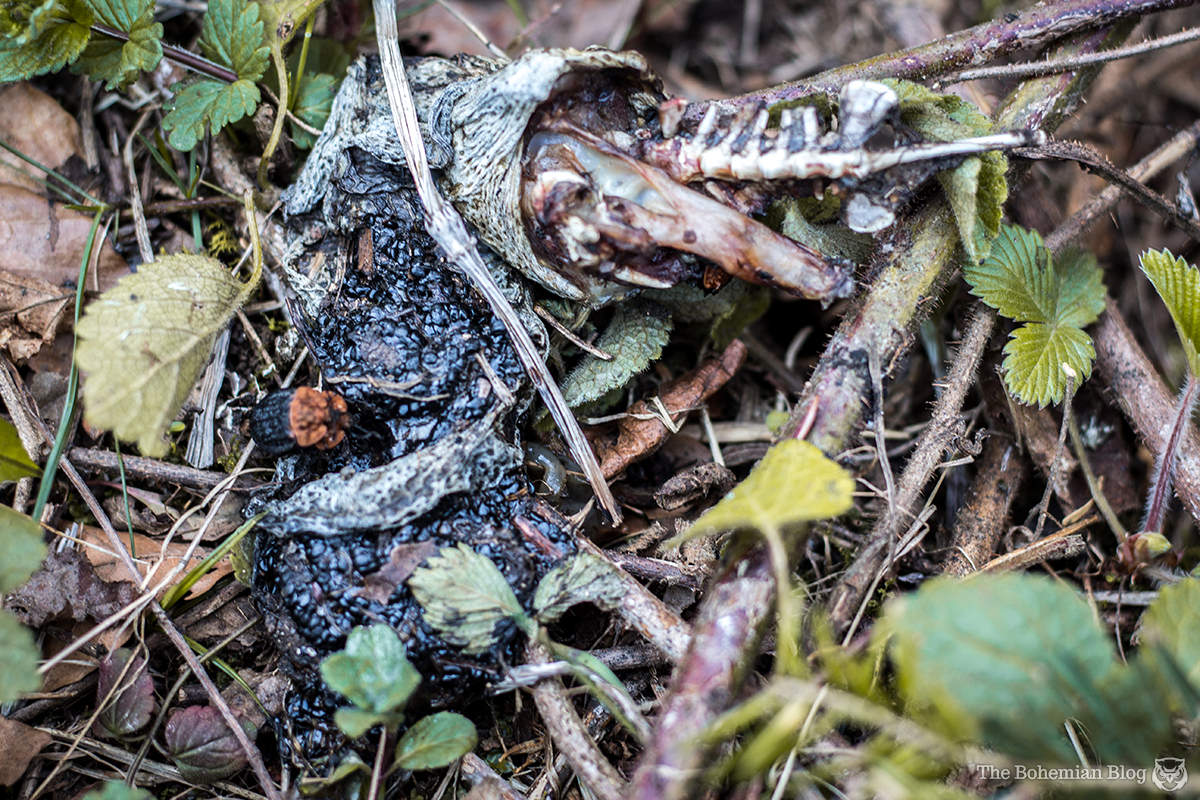 Beside the pond, the half-digested carcass of some unfortunate amphibian.