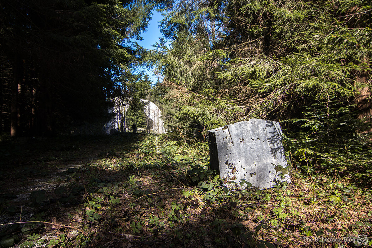 Engraved stones appear scattered almost at random throughout the overgrown forest.