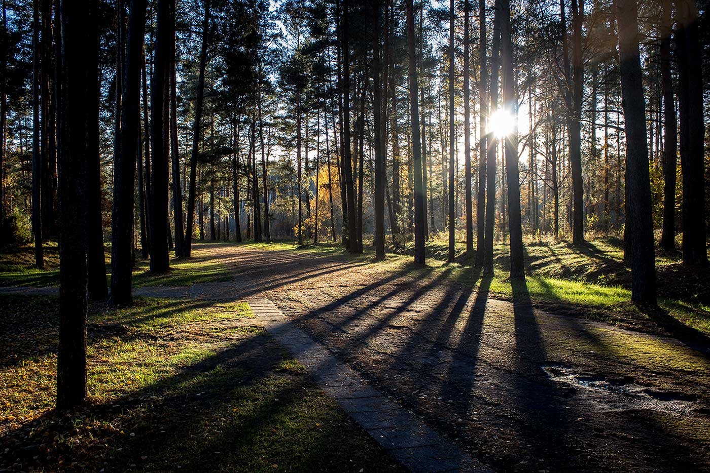 The forested approach to the Salaspils Memorial. Salaspils Memorial, Latvia.
